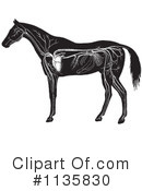 Royalty-Free (RF) Horse Anatomy Clipart Illustration #1135830