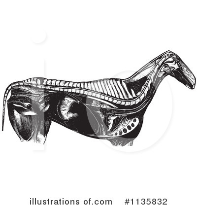 Horse Anatomy Clipart #1135832 by Picsburg