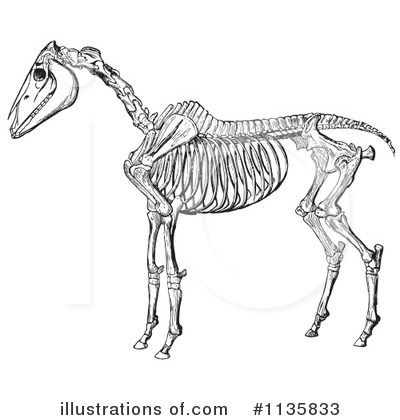 Horse Anatomy Clipart #1135833 by Picsburg