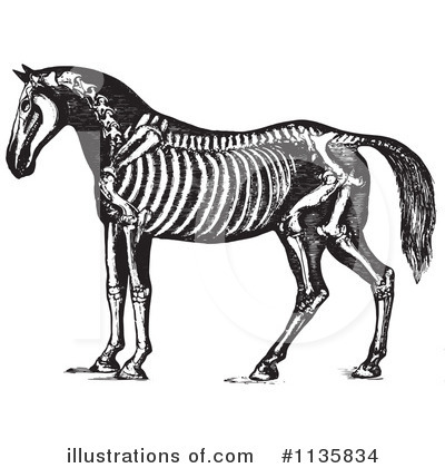 Horse Anatomy Clipart #1135834 by Picsburg