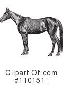 Horse Clipart #1101511 by BestVector