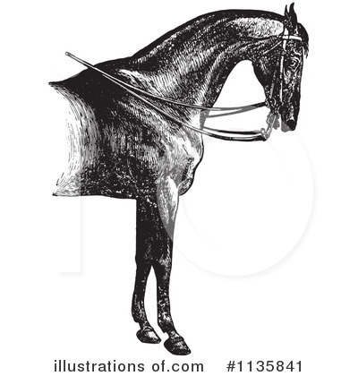 Horse Anatomy Clipart #1135841 by Picsburg