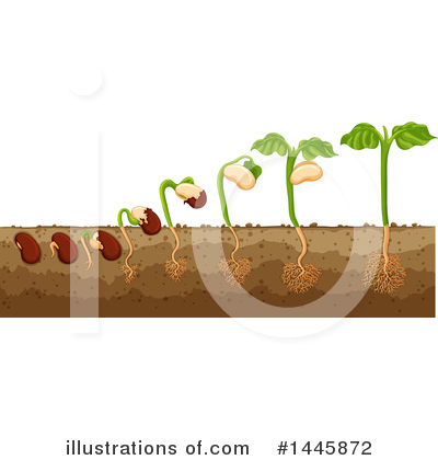 Seedling Clipart #1445872 by Graphics RF