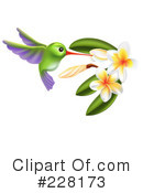 Royalty-Free (RF) Hummingbird Clipart Illustration #228173