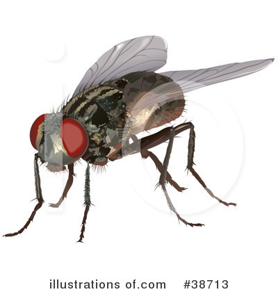 House Fly Clipart #38713 by dero
