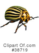 Insect Clipart #38719