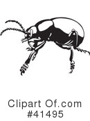 Insects Clipart #41495
