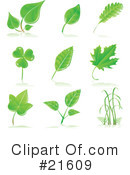 Leaves Clipart #21609