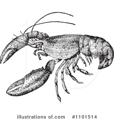 Lobster Clipart #1101514 by BestVector