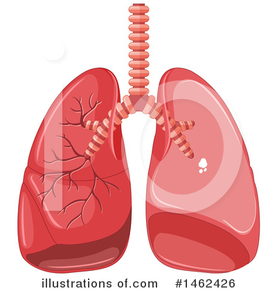 Lungs Clipart #1462426 by Graphics RF