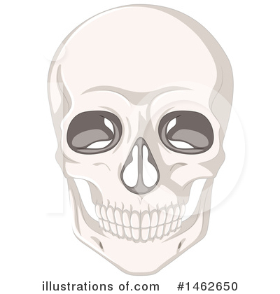 Anatomy Clipart #1462650 by Graphics RF