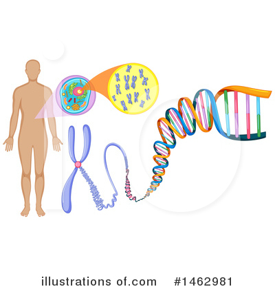 Dna Clipart #1462981 by Graphics RF