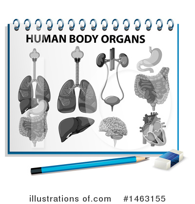 Human Heart Clipart #1463155 by Graphics RF