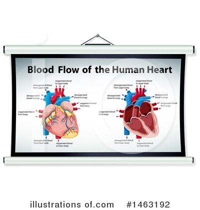 Human Heart Clipart #1463192 by Graphics RF