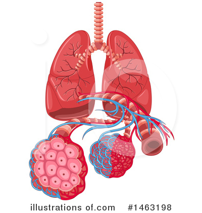 Lungs Clipart #1463198 by Graphics RF
