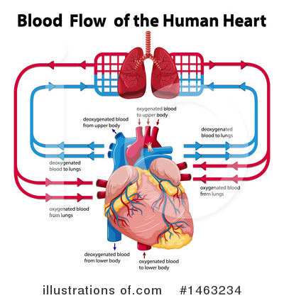 Human Heart Clipart #1463234 by Graphics RF
