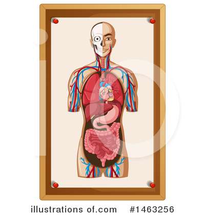 Human Heart Clipart #1463256 by Graphics RF