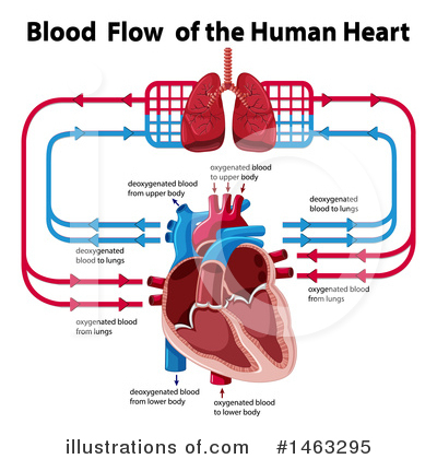 Human Heart Clipart #1463295 by Graphics RF