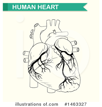 Human Heart Clipart #1463327 by Graphics RF