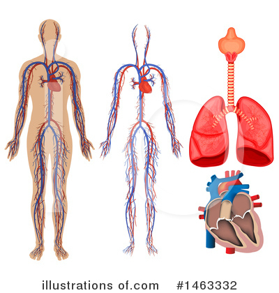 Human Heart Clipart #1463332 by Graphics RF