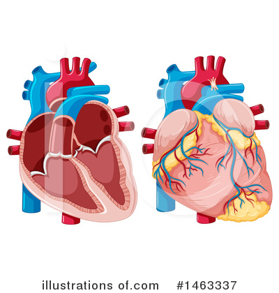 Human Heart Clipart #1463337 by Graphics RF