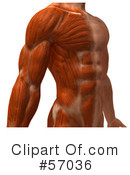 Muscle Male Body Character Clipart #57036