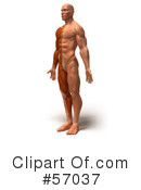 Muscle Male Body Character Clipart #57037