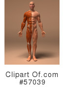 Muscle Male Body Character Clipart #57039