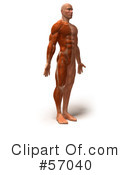 Muscle Male Body Character Clipart #57040