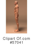 Muscle Male Body Character Clipart #57041