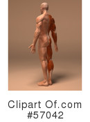 Muscle Male Body Character Clipart #57042