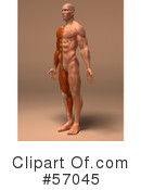 Muscle Male Body Character Clipart #57045