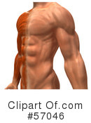 Muscle Male Body Character Clipart #57046