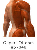 Muscle Male Body Character Clipart #57048