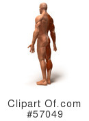 Muscle Male Body Character Clipart #57049