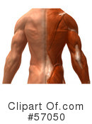 Muscle Male Body Character Clipart #57050