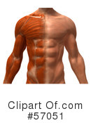 Muscle Male Body Character Clipart #57051