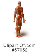Muscle Male Body Character Clipart #57052
