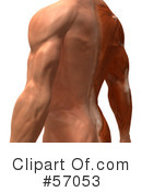 Muscle Male Body Character Clipart #57053
