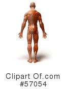 Muscle Male Body Character Clipart #57054