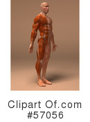 Muscle Male Body Character Clipart #57056