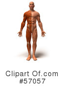 Muscle Male Body Character Clipart #57057 by Julos
