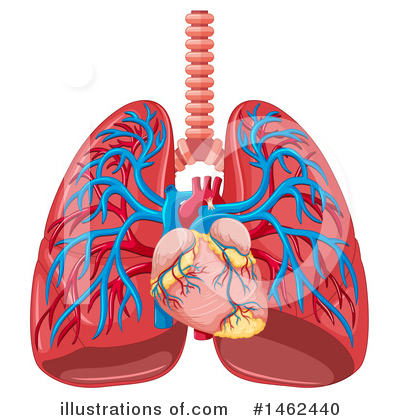 Lungs Clipart #1462440 by Graphics RF