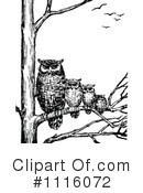 Owls Clipart #1116072 by Prawny Vintage