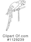 Parrot Clipart #1129239 by Picsburg