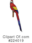 Parrot Clipart #224019 by Vitmary Rodriguez