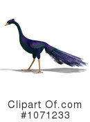 Peacock Clipart #1071233