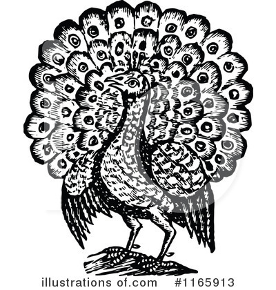 Peacock Clipart #1165913 by Prawny Vintage