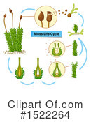 Plant Clipart #1522264 by Graphics RF