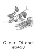 Plants Clipart #6493 by JVPD